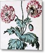 Garden Poppy With Black Seeds Metal Print