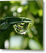 Garden Reflections Metal Print