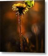 Garden Stories II Metal Print