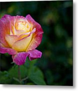 Garden Tea Rose Metal Print