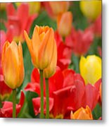Garden Torches Metal Print