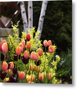 Garden Tulips Metal Print by Julie Palencia