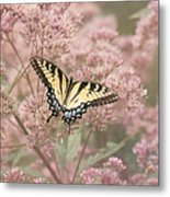 Garden Visitor - Tiger Swallowtail Metal Print