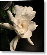 Gardenia Blossom Metal Print