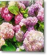Gardens - Pink And Lavender Hydrangea Metal Print