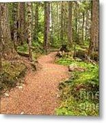 Garibaldi Path To Cheakamus Lake Metal Print