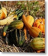 Gather The Harvest Metal Print