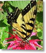 Gathering Nectar Metal Print by Kim Galluzzo Wozniak