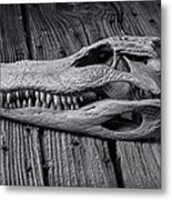 Gator Black And White Metal Print