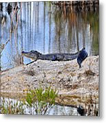 Gator On The Mound Metal Print