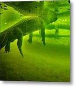 Gator Reflection Metal Print
