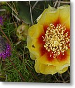 Gattinger's Prairie Clover And Prickly Pear Flower Metal Print