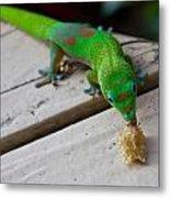 Gecko 2 Metal Print