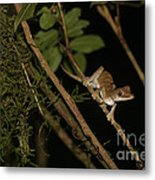 Gecko In The Night Metal Print