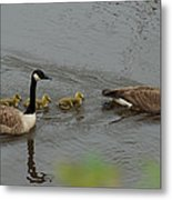 Geese And Goslings At The Flint River Metal Print