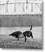Geese By The Ohio Metal Print