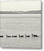Geese In A Row Metal Print