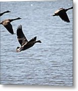 Geese In Flight Metal Print
