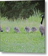 Geese Tails Metal Print