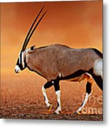 Gemsbok On Desert Plains At Sunset Metal Print