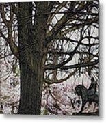 General Meade In The Cherry Blossoms Metal Print