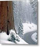 2m6836-generals Highway In The Giant Sequoias Metal Print