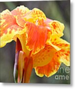 Gentle Awakening Metal Print