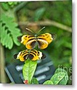 Gentle Butterfly Courtship 02 Metal Print