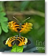 Gentle Butterfly Courtship 03 Metal Print