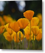 Gently Swaying In The Wind  Metal Print