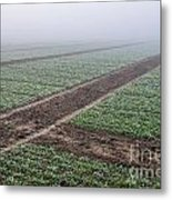 Geometry In Agriculture Metal Print