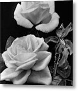 'george Arends' Roses Metal Print