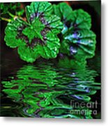 Geranium Leaves - Reflections On Pond Metal Print