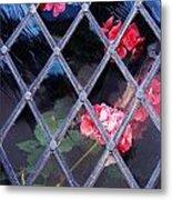 Geraniums Under Glass In Wales Metal Print
