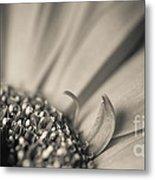 Gerbera Blossom - Bw Metal Print