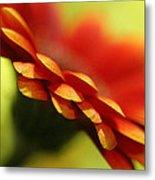 Gerbera Daisy Flower II Metal Print by Natalie Kinnear
