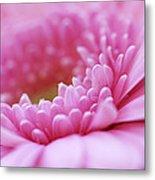 Gerbera Daisy Flower - Pink Metal Print by Natalie Kinnear