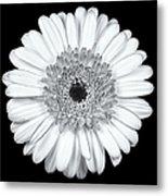 Gerbera Daisy Monochrome Metal Print