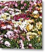 Gerbera Flowers Metal Print