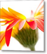 Gerbera Mix Crazy Flower - Orange Yellow Metal Print