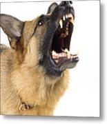 German Shepherd Dog Metal Print