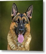 German Shepherd Portrait II Metal Print