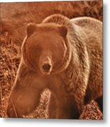 Getting A Bit Too Close Metal Print by Jeff Folger