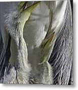 Getting Attention Metal Print