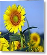 Getting To The Sun Metal Print