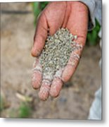 Ghanzi, Botswana- Fertilizer Pellets Metal Print
