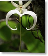 Ghost Orchid 2 Metal Print