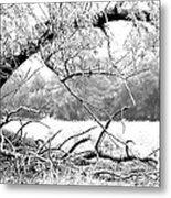 Ghost Tree 1 Of 3 Metal Print