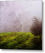 Ghost Tree In The Haunted Forest. Nuwara Eliya. Sri Lanka Metal Print
