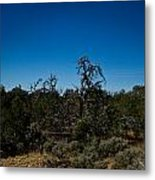 Ghost Tree Of The West Metal Print